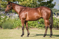 172_o_Lot32-bought-by-coolmore