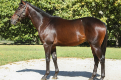 177_o_Lot8-colt-by-Elusive-Fort-out-of-Hukbah