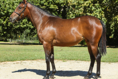 178_o_Lot25_-_filly_by_What_a_Winter_out_of_Kilcross