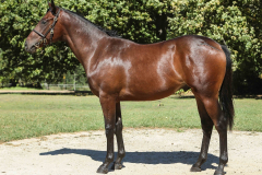 181_o_Lot195-colt-by-Pomodoro-out-of-Ceret