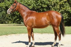 185_o_Lot139-filly-by-Fencing-Master-out-of-Tibouchina