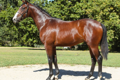 187_o_Lot107-colt-by-What-a-Winter-out-of-Sea-Jewel