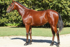 191_o_Lot63-colt-by-Sail-from-Seattle-out-of-Miss-Big-Mamma