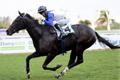 GIMME SIX wins the Grade 2 Daisy Fillies Guineas on 7th May 2017 at Greyville - co-bred, foaled, raised and started by/at Hemel 'n Aarde Stud - please see News Page for details