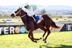 Woljayrine by HnA resident Jay Peg wins the Gr3 Godolphin Barb Stakes for juveniles at Scottsville 30th April 2017